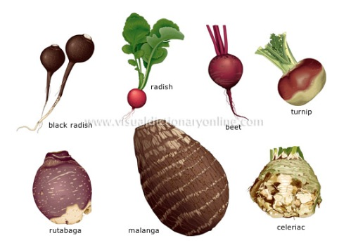 root-vegetables_2